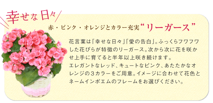 """赤・ピンク・オレンジとカラー充実""""リーガース"""""""